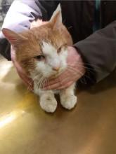 Katze in Vorchdorf gefunden!