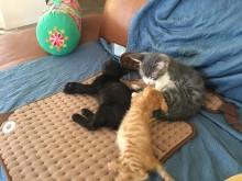 kleine Kätzchen